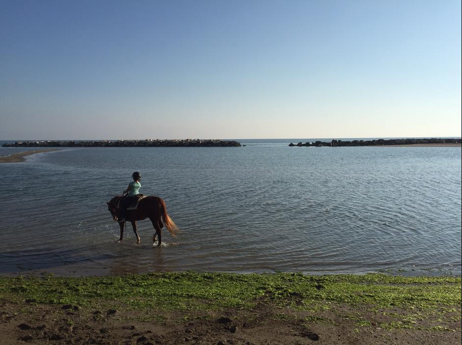 cavallo-vallugola-gabicce