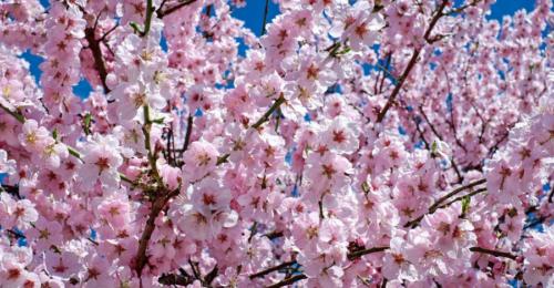 la primavera e i 5 sensi